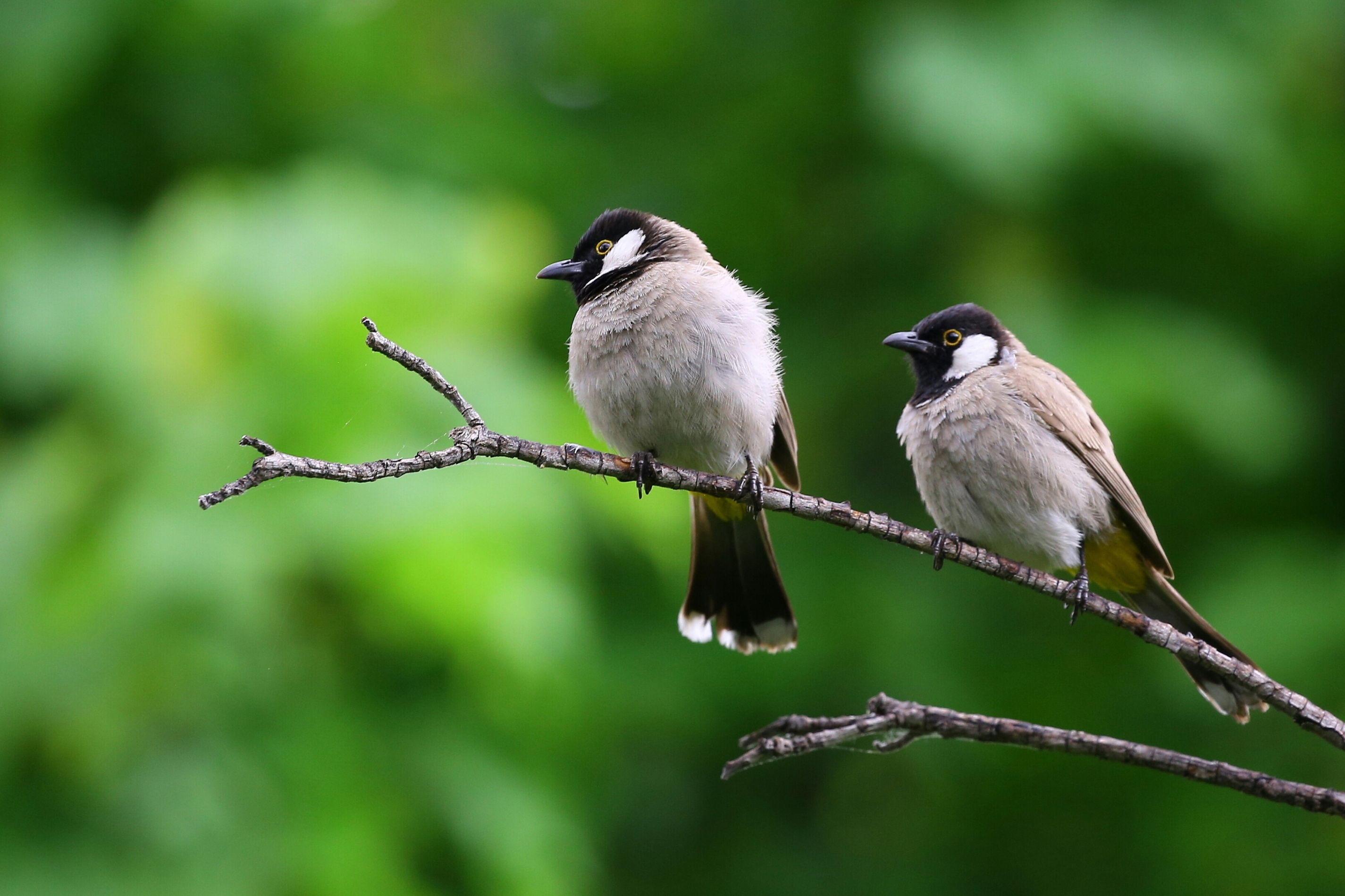 Birdwatching Resources
